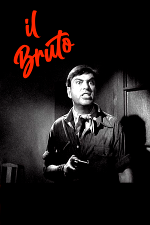 Il Bruto | The Film Club