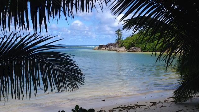 SEYCHELLES: THE CARNIVAL OF NATURE