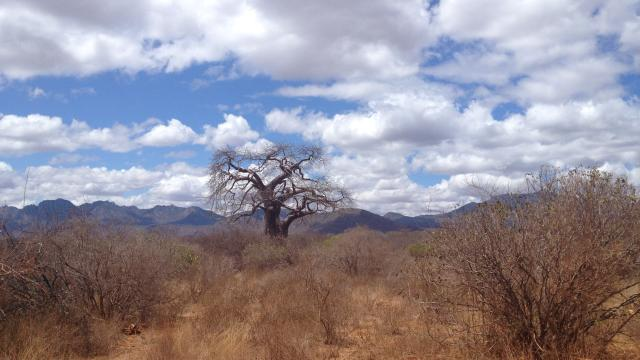 THE WILD BREATH OF AFRICA