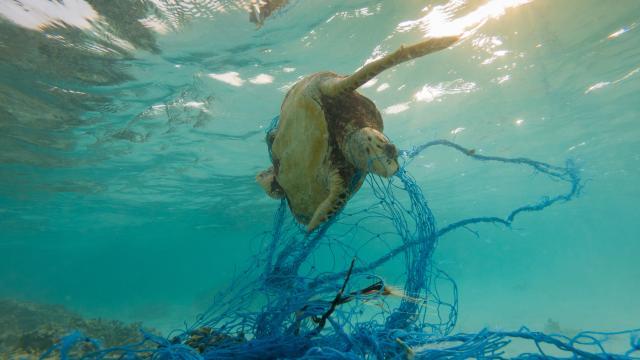Mediterranean Sea - Turtles in danger